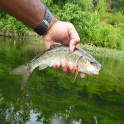 fishing_250